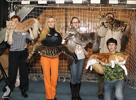 котят -209 - о кошках, котах и котятах Кот мэйкун фото Мэйкун кошка.